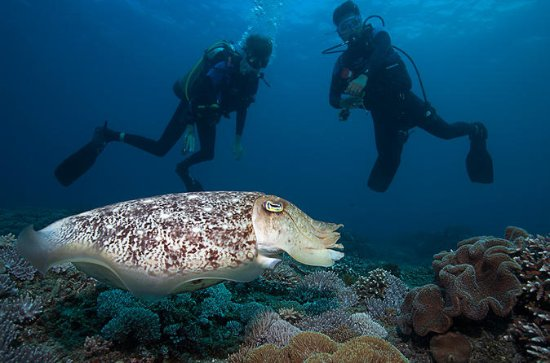 2-Day PADI Advanced Open Water Dive...