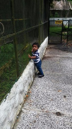 Summit Botanical Gardens: mi hijo mirando a los animales