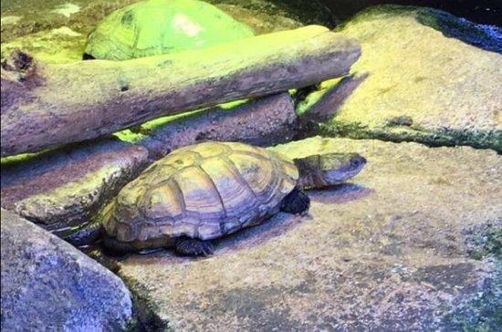 Billet d'entrée à l'aquarium d'Austin