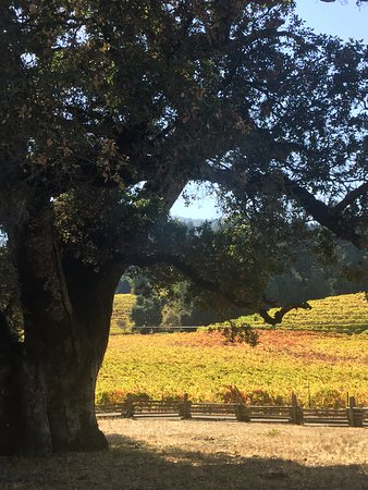 Glen Ellen, CA: view of the vineyard from the London Cottage