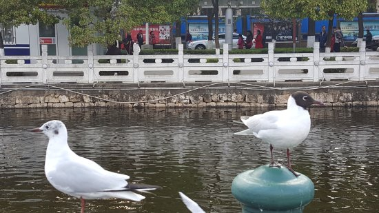 Green Lake (Cui Hu) : Best to shot the birds when they are not flying