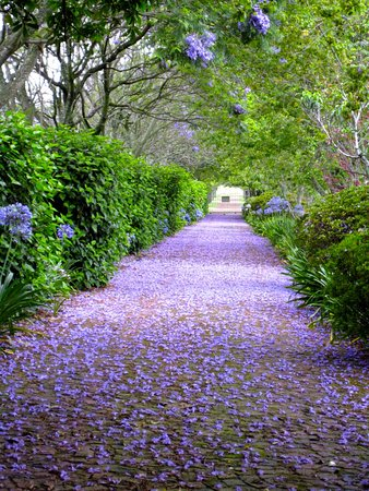 Malvern Manor Country Guest House: The drive in flower