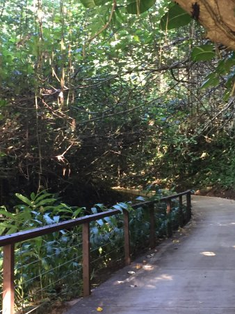 Hanalei Bay Resort: Walking to the beach through the jungle.