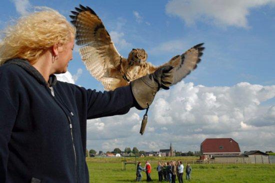 Berkel en Rodenrijs, Holland: Zelf vliegen met roofvogels en uilen - de Valkerij Proeverij workshop