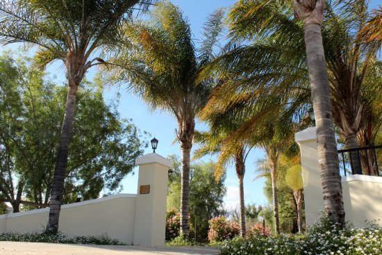 Klipheuwel Country House : The entrance to the guesthouse is beautifully lined with palm trees.