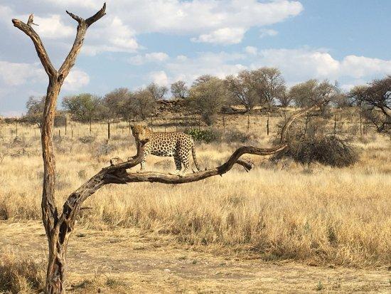 Safari Gästefarm Düsternbrook