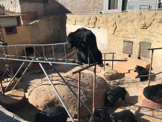 Yanqing Badaling Bear Park: photo5.jpg