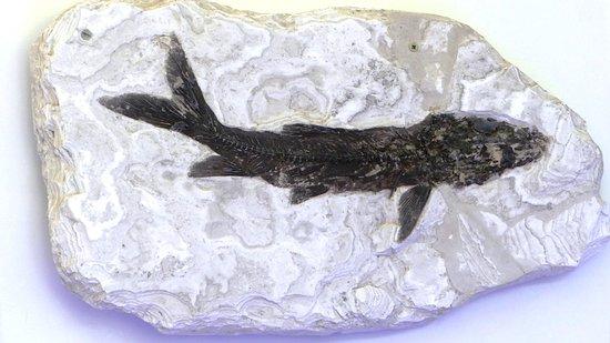 Balazuc, فرنسا: poisson