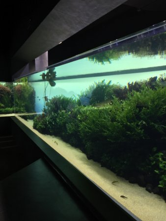 Takashi Amano Forests Underwatter at Oceanarium Lisbon