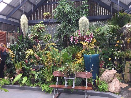 Hervey Bay Botanic Gardens Photo