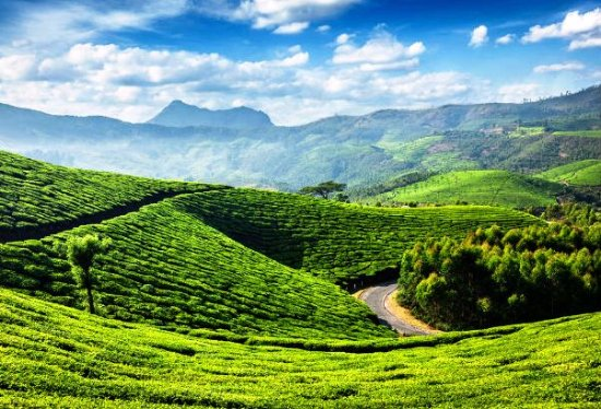 Trip and tea plantations