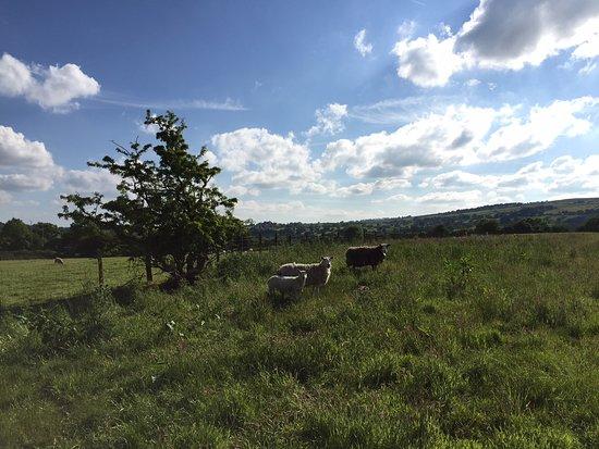 Kelbrook, UK: The fields behind the inn.