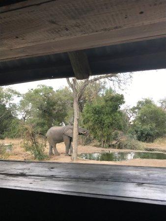Manyeleti Game Reserve 사진