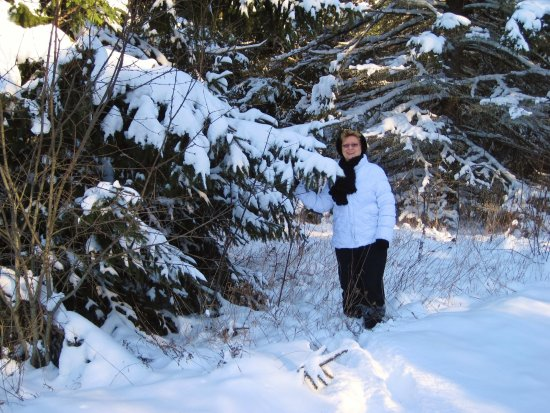 Brighton, Canada: The snow is pretty on the trail trees