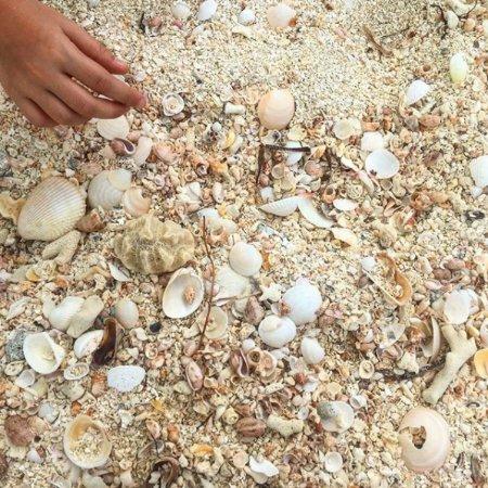 Valley Church Beach : Shells & Sand - val3_dublin : Instagram