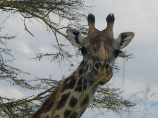 Arusha Region, Tanzania: wildlife with FTTS