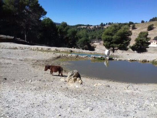 Penaguila, Spain: Caballo enano