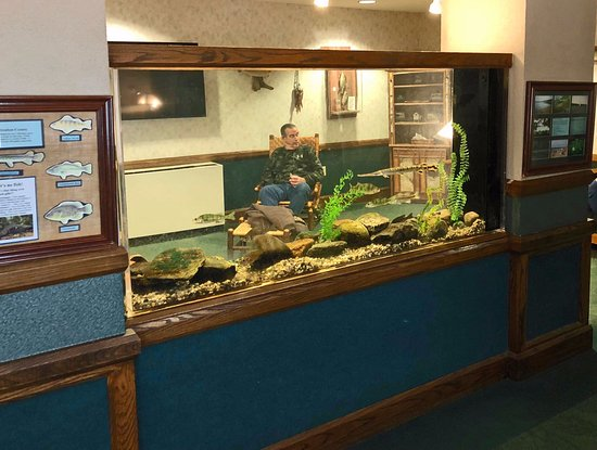 Angola, IN: Freshwater aquarium stocked with local fish.