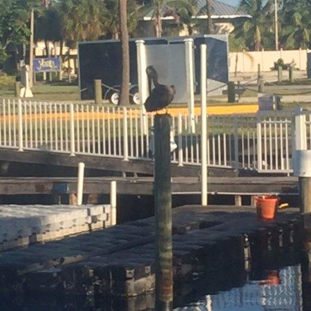 Ruskin, FL: Pelican in Marina