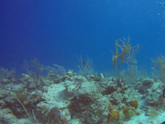 جزيرة بروفيدانس الجديدة: DIve Master pointing out some of the smaller underwater life