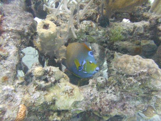 جزيرة بروفيدانس الجديدة: Colorful parrot fish