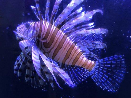 Gulf Specimen Marine Lab & Aquarium