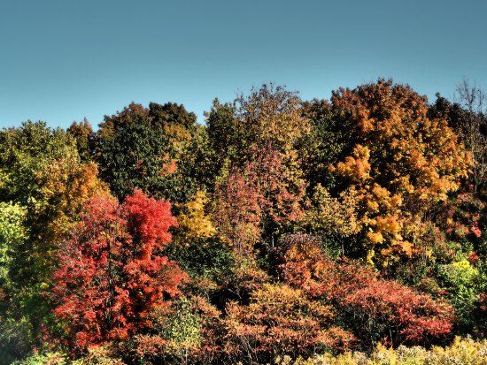 Heart Lake Conservation Area: Fall colours