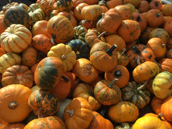 Woodbridge, Nueva Jersey: Pumpkins, a lot of them.