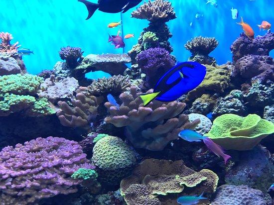 Scripps Aquarium Hours