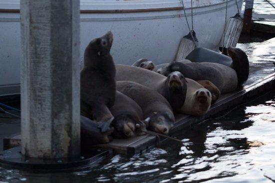 Moss Landing, CA: More sea puppies!