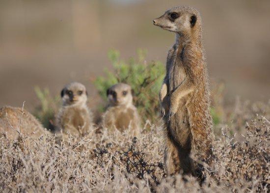 Meerkat Adventures: photo3.jpg