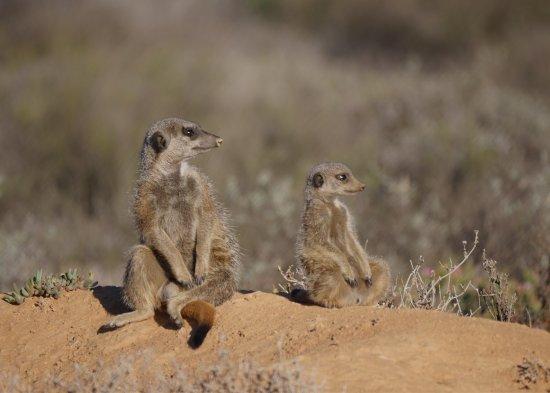 Meerkat Adventures: photo5.jpg