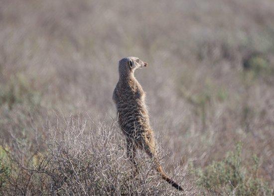 Meerkat Adventures: photo7.jpg
