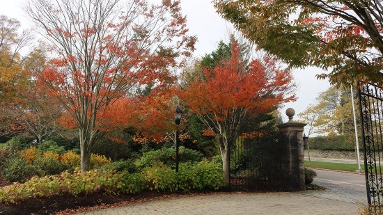 The Chanler at Cliff Walk: Classic New England Fall foliage decorates The Chanler grounds with autumnal hues.