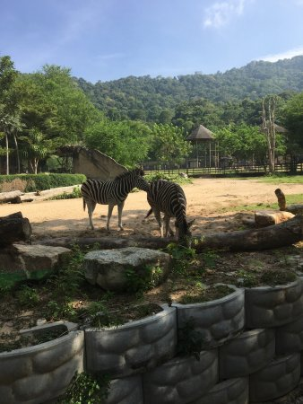 Khao Kheow Open Zoo: photo9.jpg