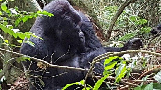 Bwindi Impenetrable National Park: 20160922_130549_large.jpg