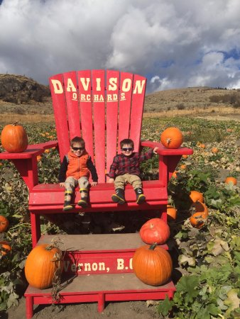 Vernon, Kanada: My boys in the pumpkin patch