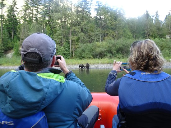Pemberton, Canada: Grizzly Bear Viewing With Local Bear Biologists