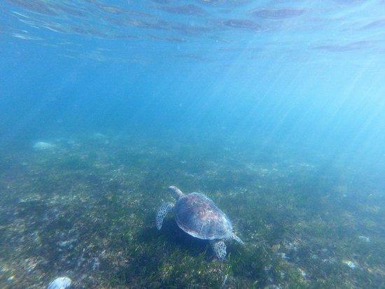 Снимок Зеленый остров