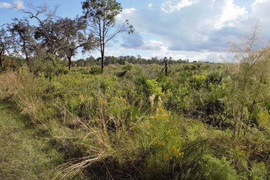 Wekiwa Springs State Park: Nice and green even in November