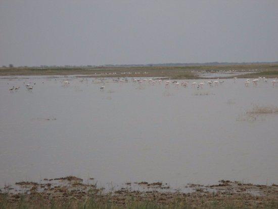 Makgadikgadi Salt Pan: Flamingos