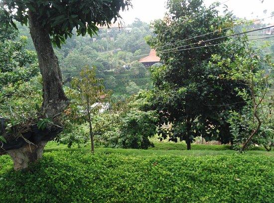 Area Sekitarnya Picture Of Warung Desa Trawas Mojokerto
