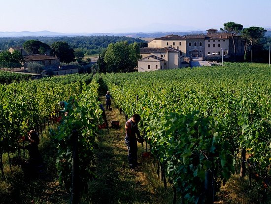 Castelnuovo Berardenga, Italy: View From Vineyards