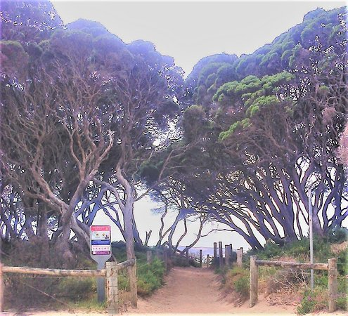 Anglesea, Austrália: View looking towards the Point as seen from the main carpark.