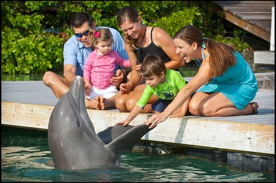 Duck Key, FL: Dolphin Connection