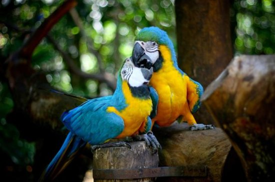 Guira Oga Bird Park Admission with...