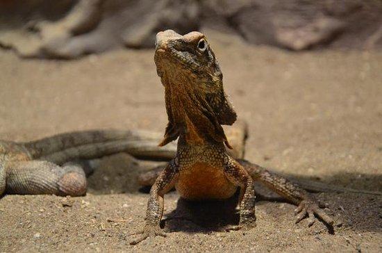 Acuario de Antalya y Wildpark Reptile...