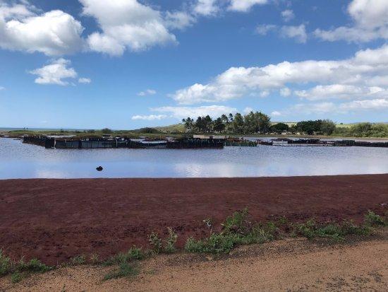 Hanapepe, HI: salt pond collection area