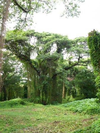 Gran Parque Metropolitano Parque
