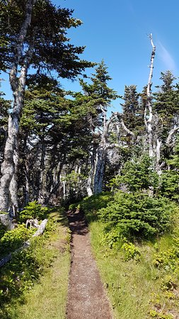 Port Rexton, Canada: The wooded area along the trail